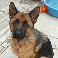 Adopt A Pet :: Finnick - Minneapolis, MN