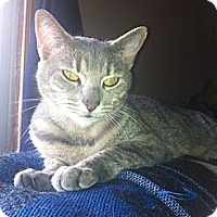 Adopt A Pet :: Punky - Pittstown, NJ