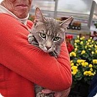 Adopt A Pet :: Burke - Bedford, MA