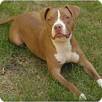 Adopt A Pet :: Dasher - Chicago, IL