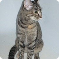 Adopt A Pet :: MorningGlory - Port Republic, MD