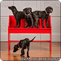 Adopt A Pet :: Michelangelo - Owensboro, KY