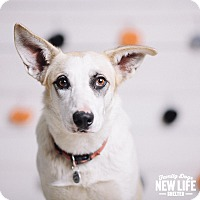 Adopt A Pet :: Corrine - Portland, OR