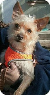 Terrier (Unknown Type, Small) Dog for adoption in Freeport, New York - Roxy