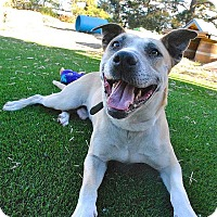 Adopt A Pet :: Chettie - Berkeley, CA