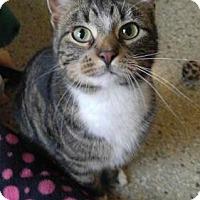 Adopt A Pet :: Stedman - South Amana, IA