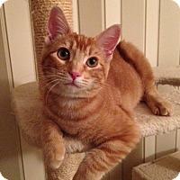 Adopt A Pet :: Cheeto - Woodland Hills, CA
