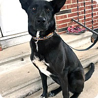 Adopt A Pet :: Nugget - Greeneville, TN