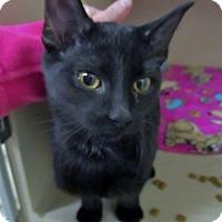 Adopt A Pet :: Chewie - Lloydminster, AB
