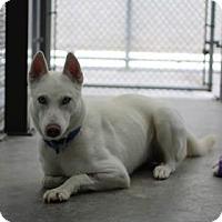 Adopt A Pet :: Dede - Reisterstown, MD
