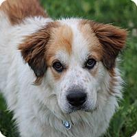 Adopt A Pet :: Mr. Jake - Glastonbury, CT