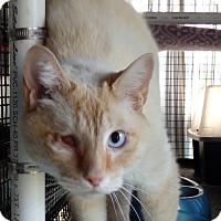 Adopt A Pet :: Redbeard - Speedway, IN