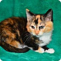 Adopt A Pet :: Kari - Buford, GA