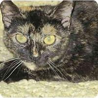 Adopt A Pet :: Cricket - Warren, OH