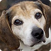 Adopt A Pet :: Alfie - Indianapolis, IN