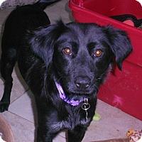 Adopt A Pet :: KAYLEE - Raleigh, NC