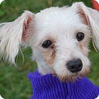 Adopt A Pet :: Tilly - Prole, IA