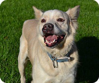 Akita Mix Dog for adoption in Michigan City, Indiana - Yuki