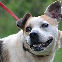 Adopt A Pet :: Kadie - Jackson, MS