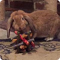 Adopt A Pet :: Melody - Moneta, VA