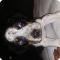 Adopt A Pet :: Reese - Tonawanda, NY