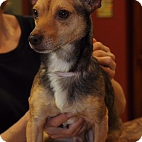 Adopt A Pet :: Diego - Boca Raton, FL