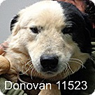 Adopt A Pet :: Donovan