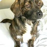 Adopt A Pet :: Mason-ADOPTION PENDING - Boulder, CO