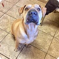 Adopt A Pet :: Mandy 6178 - Joplin, MO
