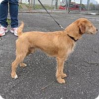 Adopt A Pet :: Lucky - KANNAPOLIS, NC