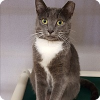 Adopt A Pet :: Violet - Middletown, NY