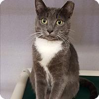 Adopt A Pet :: Violet - Middletown, NY