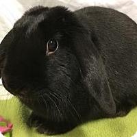 Adopt A Pet :: Stella - Woburn, MA