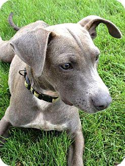 Terrier (Unknown Type, Medium) Mix Puppy for adoption in Homewood, Alabama - Polk