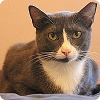Adopt A Pet :: Julie - Pensacola, FL