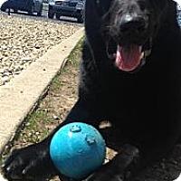 Adopt A Pet :: Goober - Lewisville, IN