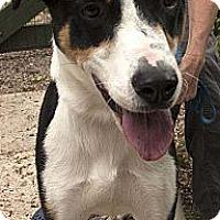 Adopt A Pet :: Bingo ADOPTED! - Antioch, IL