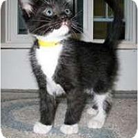 Adopt A Pet :: Darrell - Shelton, WA