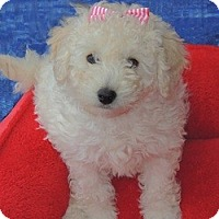 Adopt A Pet :: Beulah - La Habra Heights, CA