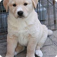 Adopt A Pet :: Herbie - La Habra Heights, CA