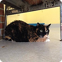Adopt A Pet :: Pookey - Lancaster, MA