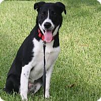 Adopt A Pet :: Lucky! - Houston, TX