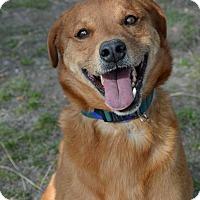 Adopt A Pet :: Neiko - Mountain Center, CA
