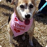 Adopt A Pet :: Chelsea - Baton Rouge, LA
