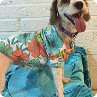 Adopt A Pet :: Sydney - Sugarland, TX