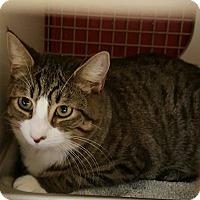 Adopt A Pet :: Joey - Raritan, NJ