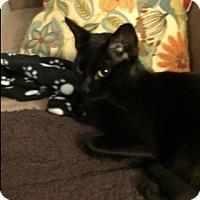 Adopt A Pet :: Lovebug - Stafford, VA