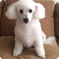 Adopt A Pet :: Monty - East Hanover, NJ