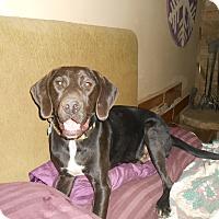 Adopt A Pet :: Leo - North Jackson, OH