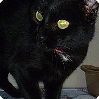 Adopt A Pet :: Nyla - Hamburg, NY